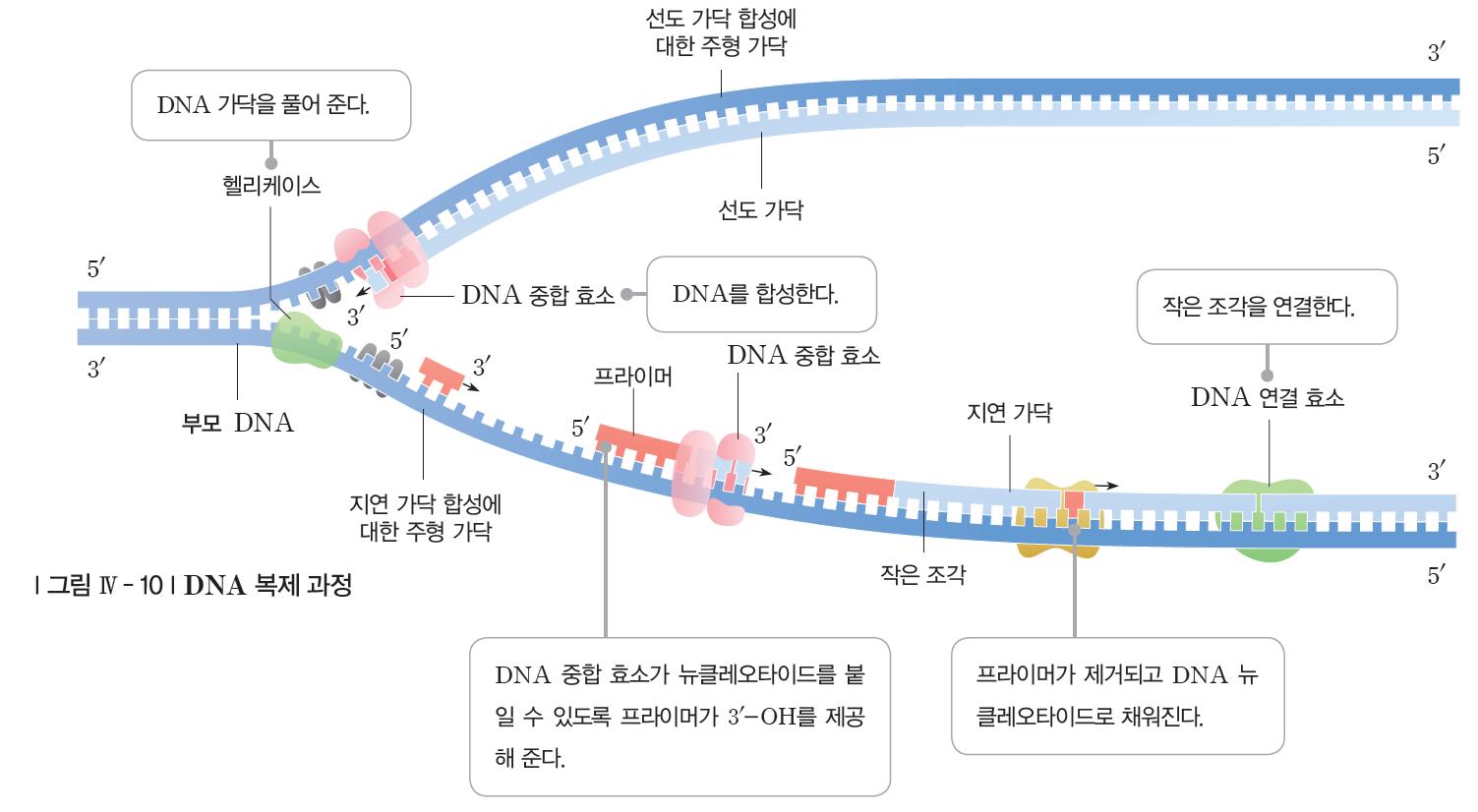 (주)지학사 생명과학Ⅱ 112쪽 현행내용 이미지